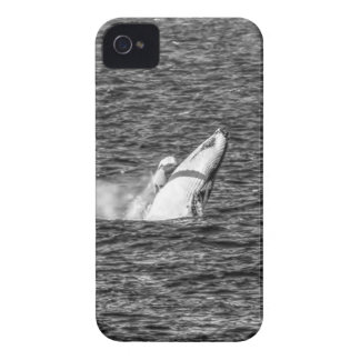 HUMPBACK WHALE QUEENSLAND AUSTRALIA iPhone 4 Case-Mate CASES