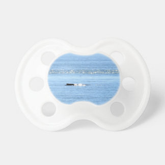 HUMPBACK WHALE QUEENSLAND AUSTRALIA PACIFIER