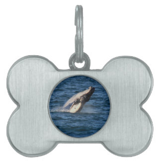 HUMPBACK WHALE QUEENSLAND AUSTRALIA PET NAME TAG