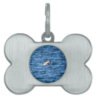 HUMPBACK WHALE QUEENSLAND AUSTRALIA PET NAME TAGS