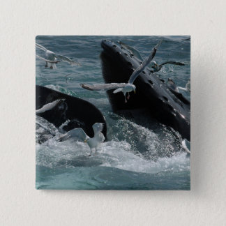 Humpback Whale Square Pin