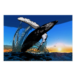 Humpback Whale Sunset Breach Poster