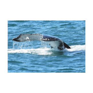 HUMPBACK WHALE TAIL & FISH QUEENSLAND AUSTRALIA CANVAS PRINT