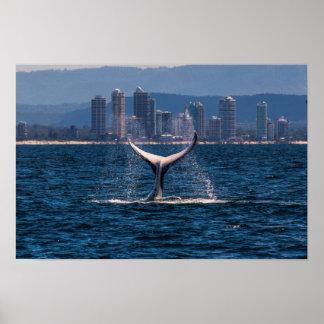 Humpback Whale Tail Fluke Off Surfers Paradise Poster