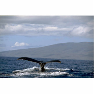 Humpback whale tail, Hawaii Standing Photo Sculpture