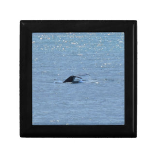 HUMPBACK WHALE TAIL QUEENSLAND AUSTRALIA GIFT BOXES