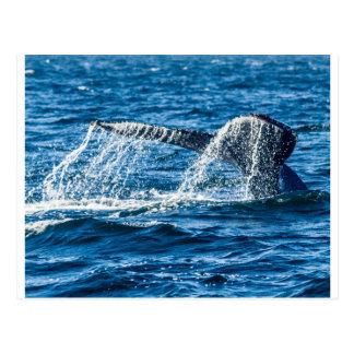 Humpback Whale Washington State Postcard