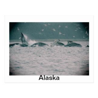 humpback whales, Alaska Postcard