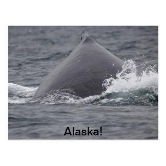 humpback whale's hump postcard