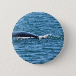 HUMPBACK WHALES MACKAY QUEENSLAND AUSTRALIA 2 INCH ROUND BUTTON