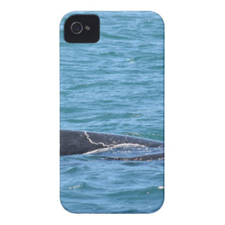 HUMPBACK WHALES MACKAY QUEENSLAND AUSTRALIA iPhone 4 Case-Mate CASE