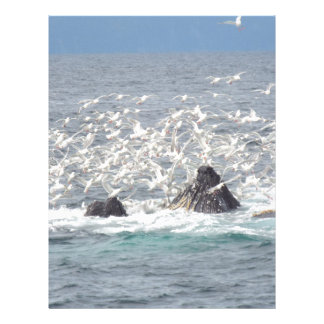 Humpback whales, seagulls in Seward, Alaska Custom Letterhead