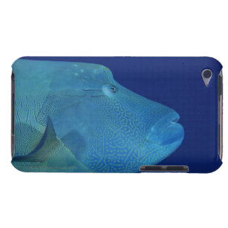 Humphead Wrasse 2 Barely There iPod Case