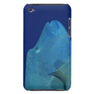 Humphead Wrasse 2 iPod Touch Cover