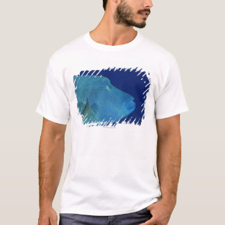 Humphead Wrasse 2 T-Shirt
