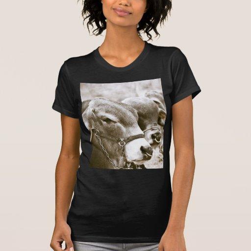 Hunchback Cows T-shirts