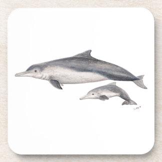 Hunchbacked dolphin of Australia Coaster