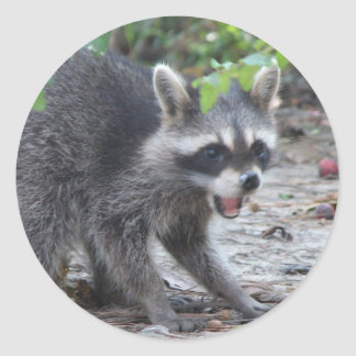hungry Baby Raccoon Sticker