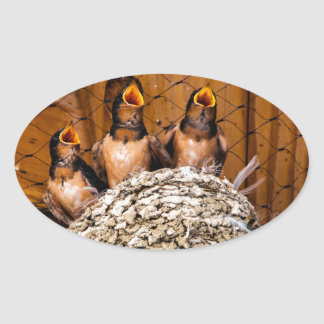 Hungry Baby Swallows - Antelope Island - Utah Oval Sticker