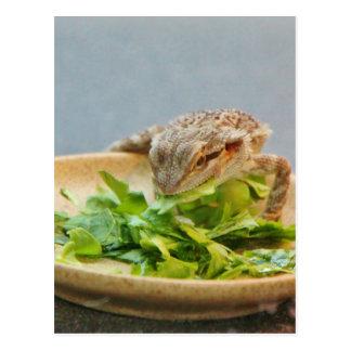 Hungry Bearded Dragon Postcard