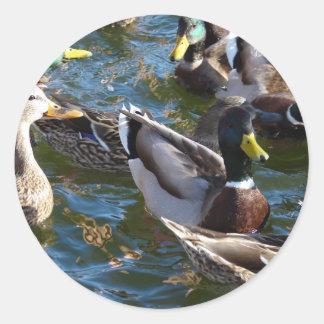 Hungry Ducks Classic Round Sticker