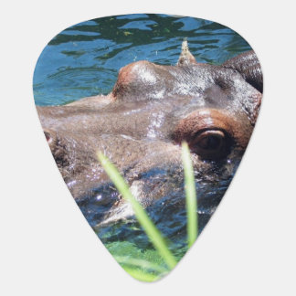 Hungry Hippo Pick
