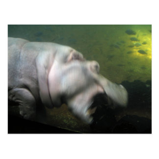 Hungry Hippo Postcard