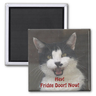Hungry Kitty Cat Funny Magnets