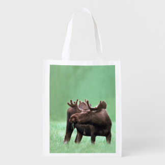 Hungry Moose with Velvet Antlers at Yellowstone Market Totes