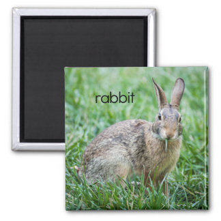 Hungry Rabbit Magnet