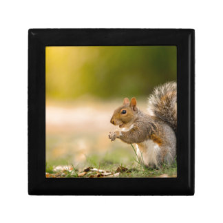 Hungry Squirrel Gift Box