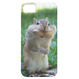 Hungry Squirrel iPhone 5 Covers