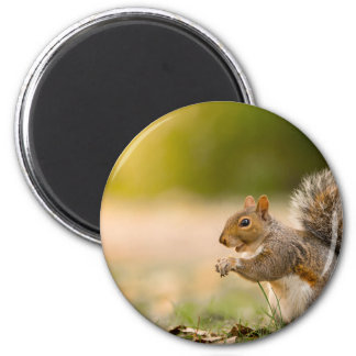 Hungry Squirrel Magnet