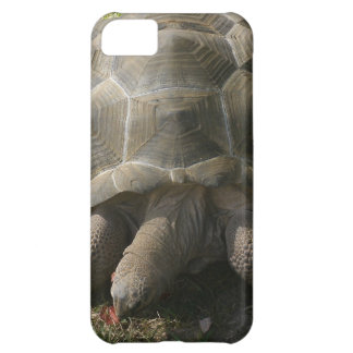 HUNGRY TORTOISE ON A FALL STROLL. CASE FOR iPhone 5C