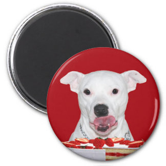 Hungry white pitbull magnet