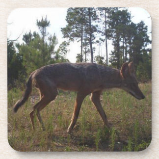 Hunter Game Cam Caught a Coyote Coasters