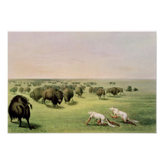 Hunting Buffalo Camouflaged Poster