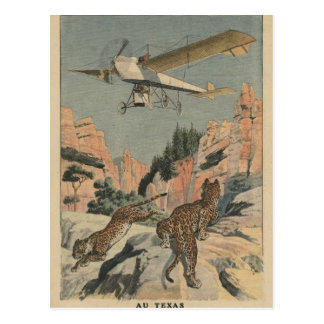 Hunting panthers from an airplane in Texas Postcard