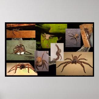Huntsman Spider Poster