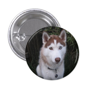 husky and the horse tails 1 inch round button