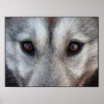 Husky Art Print Sled Dog Art Poster Wolf Pup Gifts