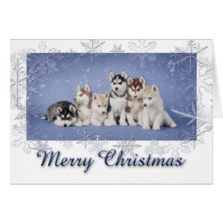 Husky Christmas Card