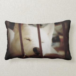 Husky cushion