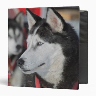 Husky dog before a race, Canada 3 Ring Binder