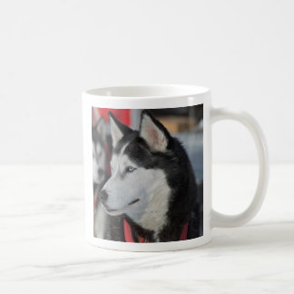 Husky dog before a race, Canada Coffee Mug