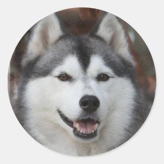 Husky Dog Sticker