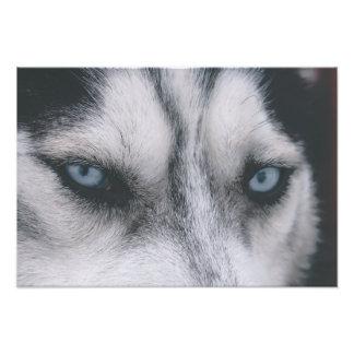 Husky eyes photo print