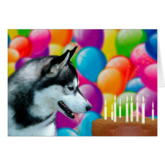 Husky Happy Birthday Card