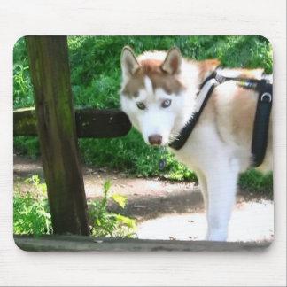 husky hiking mouse pad