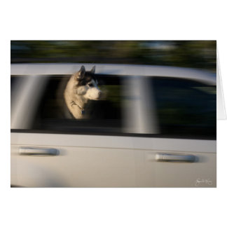 Husky in Motion - Card